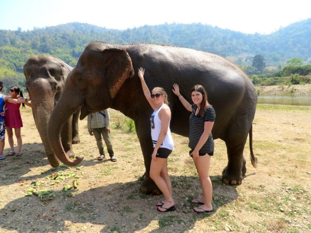 why you should never ride an elephant- elephant riding bad