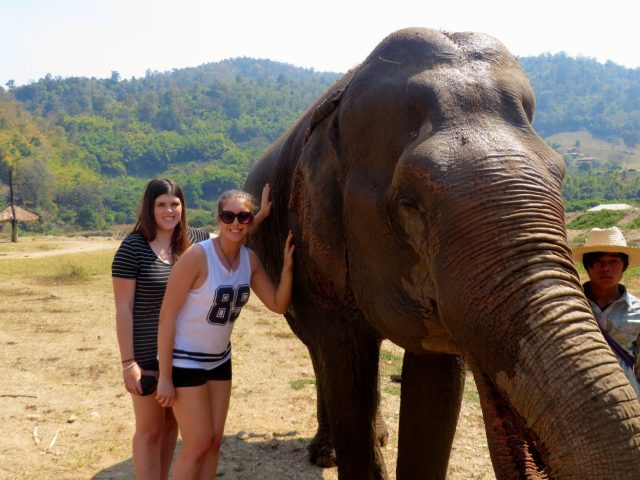 Interacting with the elephants at Elephant Nature Park near Chiang Mai