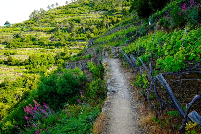 what to do in cinque terre hiking