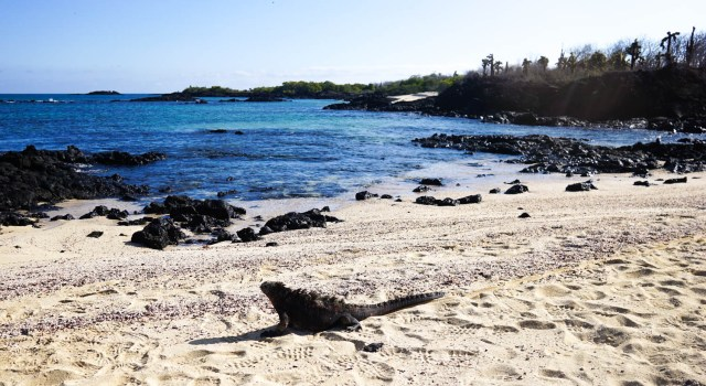 last minute galapagos cruise deal 8 days lonesome george