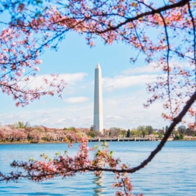 2018 National Cherry Blossom Festival Guide