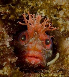 scott gietler underwater photographer adventure music life nici lucas