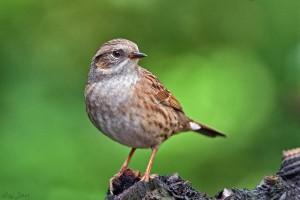 kleine  vogeltje