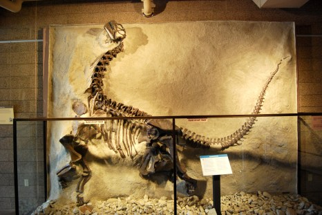 fossil in Utah Fieldhouse of Natural History in Vernal, Utah