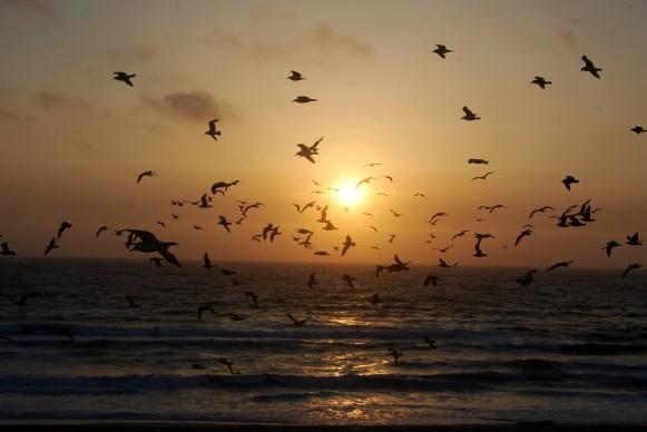 Sunset Flock - Seaside, California