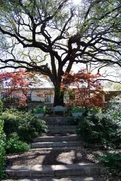 The Throne Tree - Dallas Arboretum, Texas
