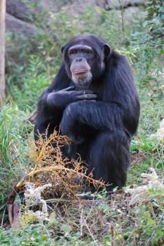 dallas-zoo-23-nov-2010-162