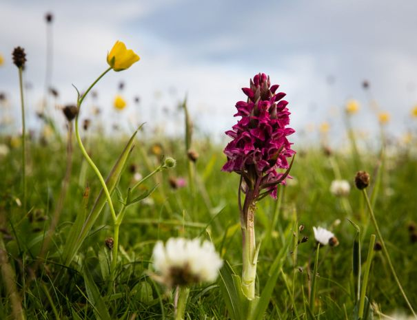 Orchid in Machrie (©Leading Lines)
