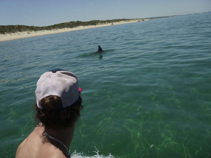 The dolphins stayed around for some time.