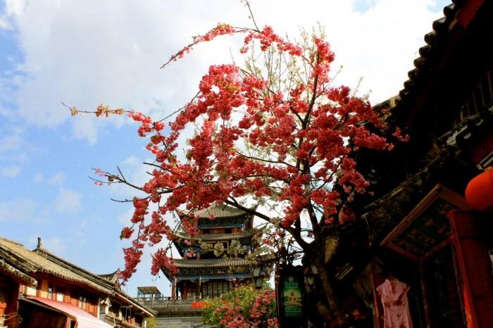 Dali Yunnan (photo by Hannah Lee)