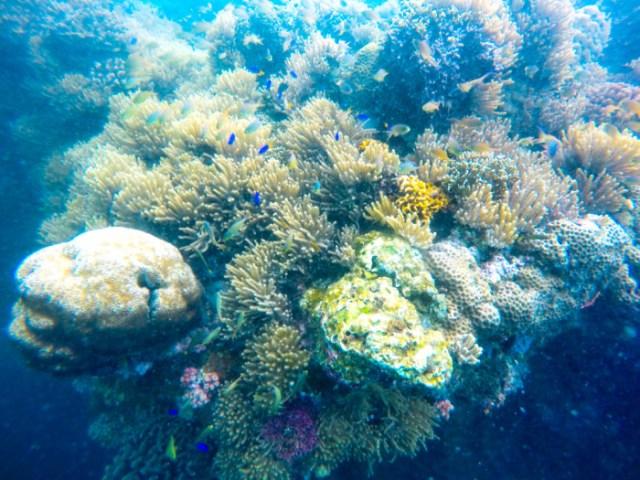 Moalboal reef
