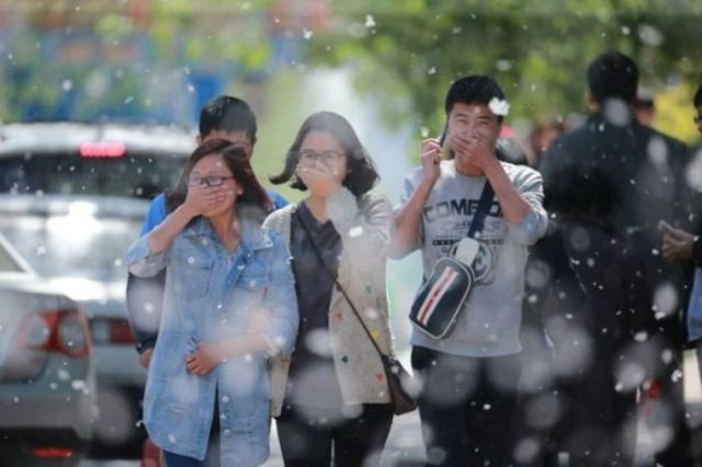 Catkins Problem Beijing