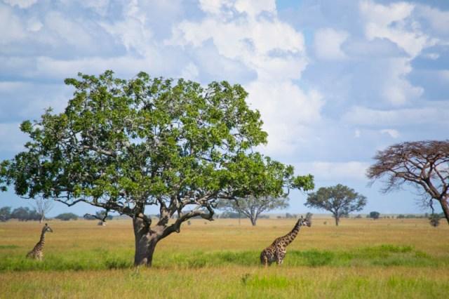 Life in Tanzania