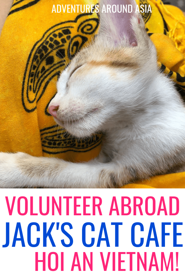 Do you want to volunteer with cats in Vietnam? Heres how you can volunteer with animals on your travels and make a difference! #hoian #volunteer #animals #cats #kittens #vietnam