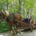 Living history with a horse and cart at New Brunswick's Acadian History Village