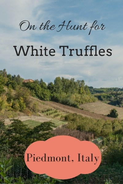 On The Hunt For White Truffles, Piedmont, Italy