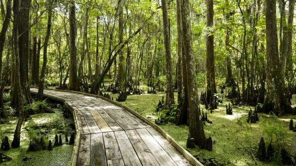 You and your spouse can explore the Barataria Preserve for free. Make it a date night as you walk the trails through the swamp and enjoy nature's beauty! See other free dates at adventuresofb2.com
