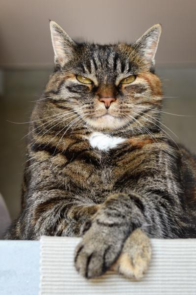 Knowing what makes your partner angry will help you learn what things to avoid. The last thing you want is to be in a fight with your spouse and have them looking at you like this disapproving cat. Learning these different things about your husband will help improve your marriage. - adventuresofb2.com