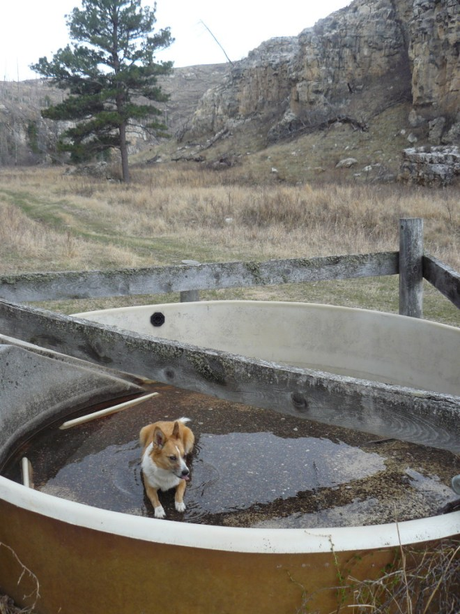 Still no creek or stream, but Lupe did come to this round livestock water trough, which she used as her wading pool. Lupe saw no livestock anywhere in East Hell Canyon.