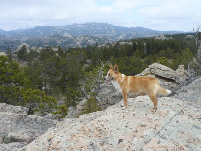 Lupe SE of Buzzard Peak in the Laramie Range. Photo looks W.