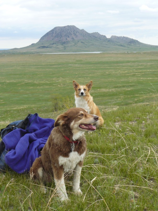 Lupe & Dusty up on the ridge a few miles SW of Bear Butte. The 111 mile long Centennial Trail starts at the top of Bear Butte and runs S through the Black Hills to Wind Cave National Park.