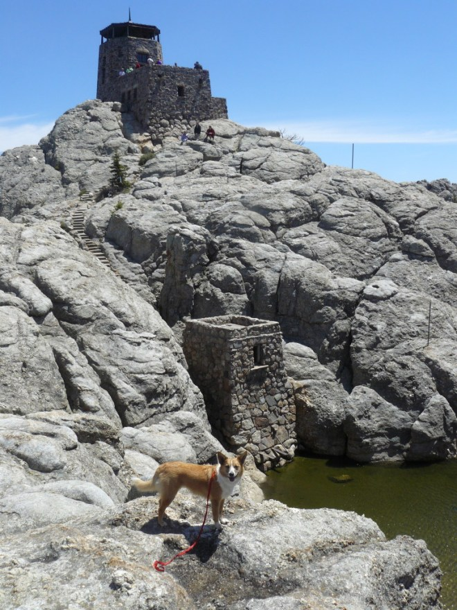 Harney Peak or Hinhan Kaga lookout tower at the summit. Lupe has already been there by now. Lupe's 5th successful climb of the mountain!