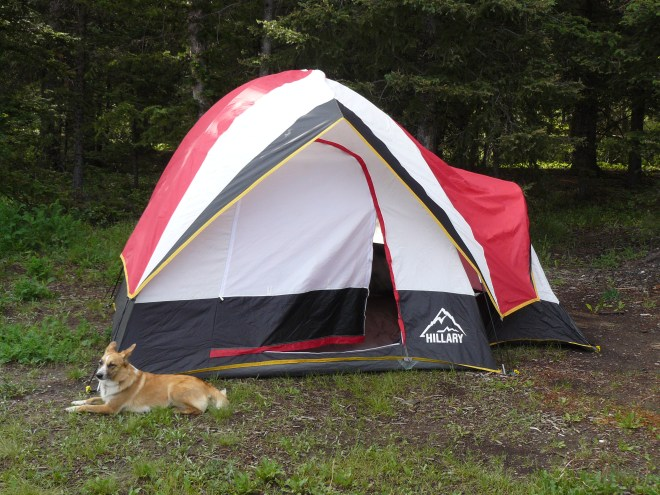 Lupe claims her favorite camping site on the Clark's Fork of the Yellowstone.
