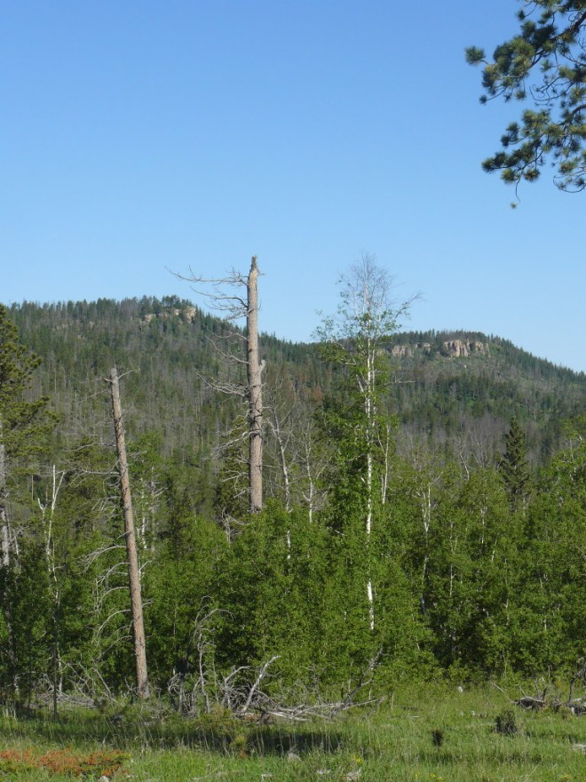 Green Mountain is the high point on the right. Photo looks NNW from USFS Road No. 301.