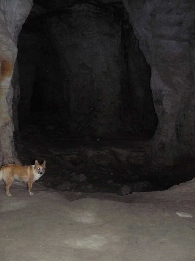 Possessed dingo prepares to face dragons in the Dragon Caves.