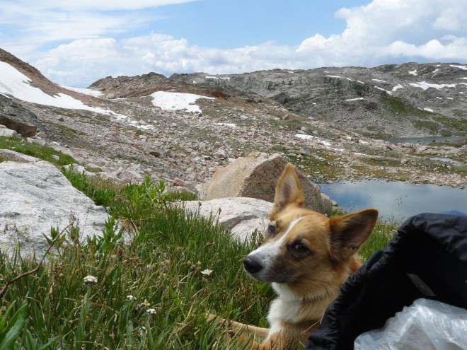Lupe takes a break not far from Triskele Lake in the Beartooth Mountains.