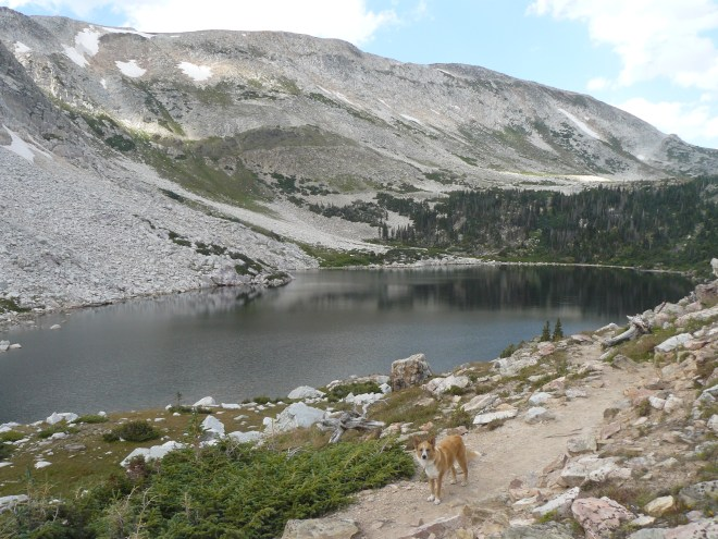 Lupe farther N now to the E of Lookout Lake along the Lakes Trail. Medicine Bow Peak in the background.