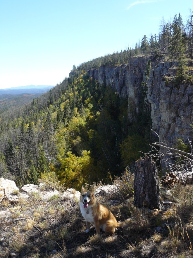 Lupe near the cliffs. These cliffs are well N of White Tail Peak. Photo looks S.