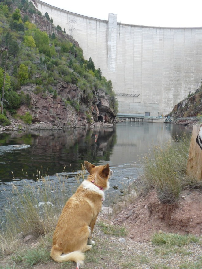 Lupe below Flaming Gorge dam, UT 8-26-15