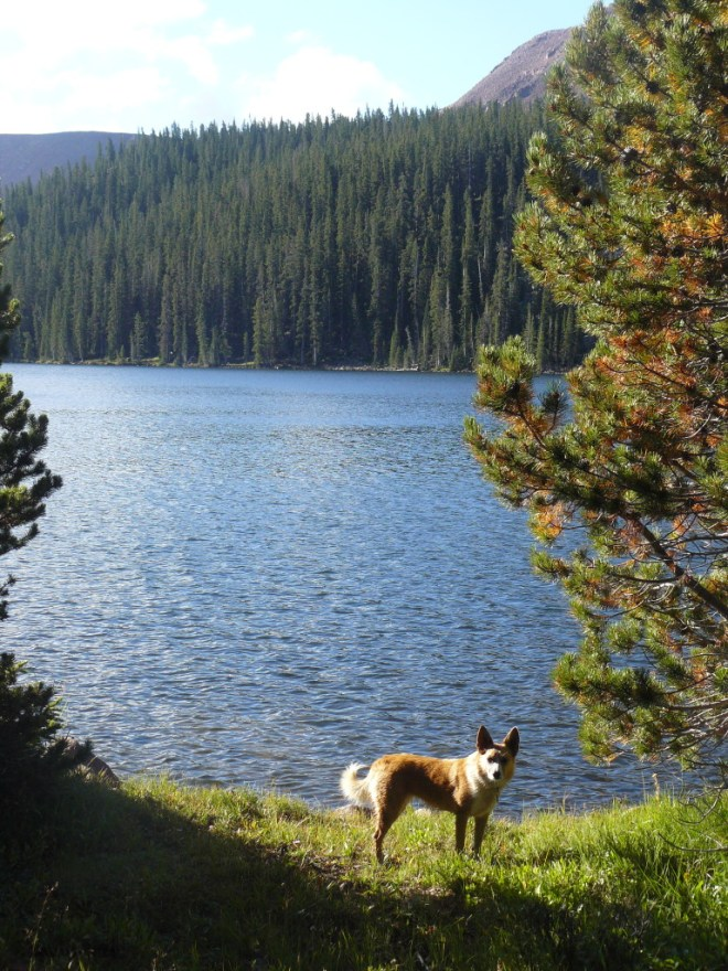 Lupe near the W end of N shore of Tamarack Lake.