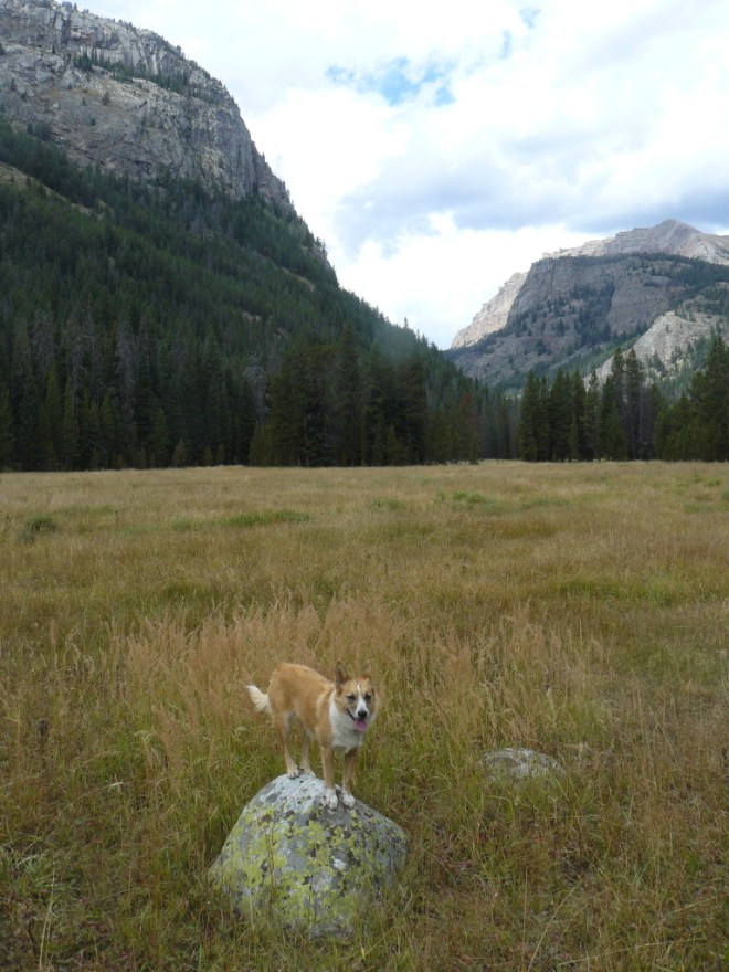 Lupe reaches Beaver Park in the Wind River Range. Granite Peak is on the left. Photo looks N.