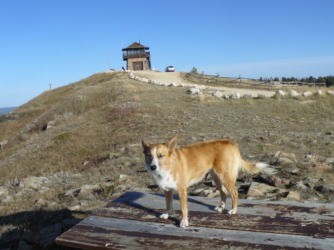 The Cement Ridge fire lookout tower from the NW.