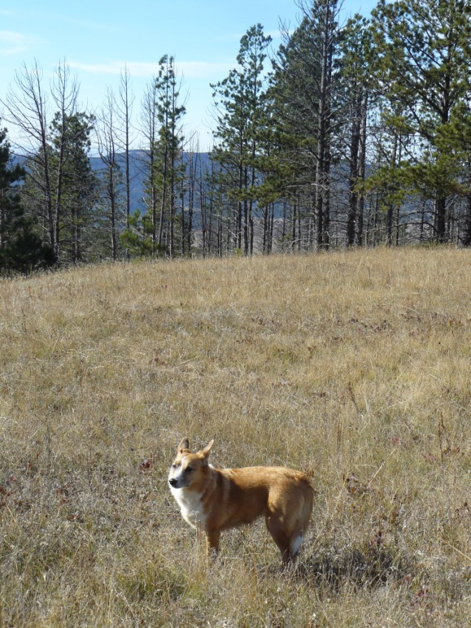 OK, there was kind of a view to the W toward Mount Pisgah in Wyoming. Only peakbaggers like Lupe would come way out here for such a mediocre look at the world, though. Actually Lupe comes more for the sniffing and the squirrels than the views or even the peakbagging.
