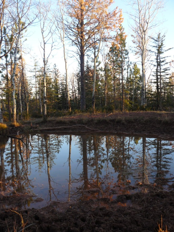 Hey, another pond shot! Trees are reflected in the pond on Crows Nest Peak.