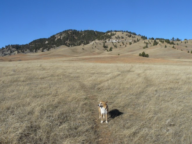 Lupe sets out from SE of Sundance Mountain.