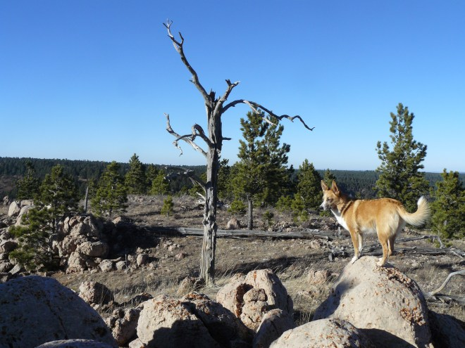Lupe on the highest rock on Sheep Nose Mountain. Photo looks N.