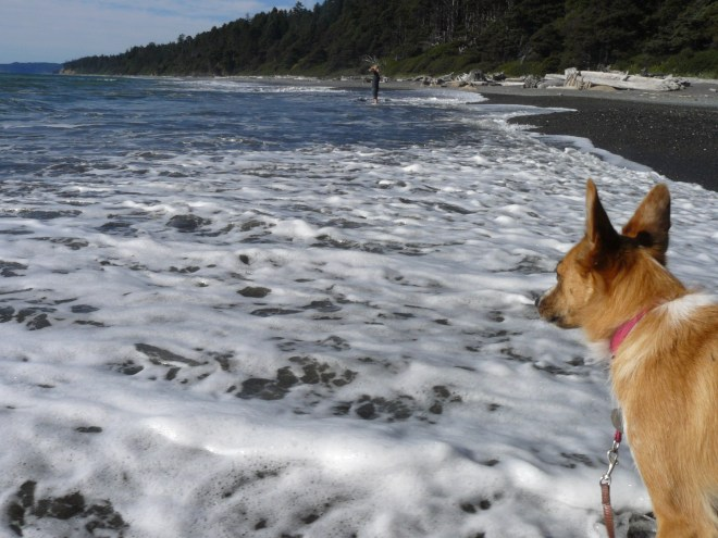 At Beach 4, Lupe went wading in the Pacific Ocean for the very first time.