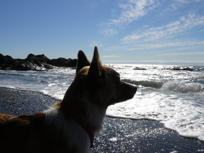 Lupe at Beach 4, Olympic Peninsula, WA 8-22-12