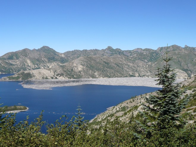 The eruption of Mt. St. Helens stripped away 230 square miles of forest. Many thousands of trees were flung into Spirit Lake. More than 32 years later, thousands of tree trunks were still floating in giant mats on the lake.