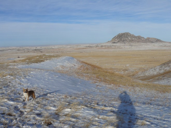 A final look back at Bear Butte to the NE. Lupe is once again up on the first big ridge here.