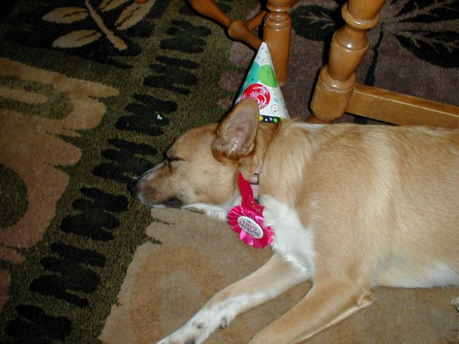 Party Pooper Puppy after her 1st big Birthday Bash!