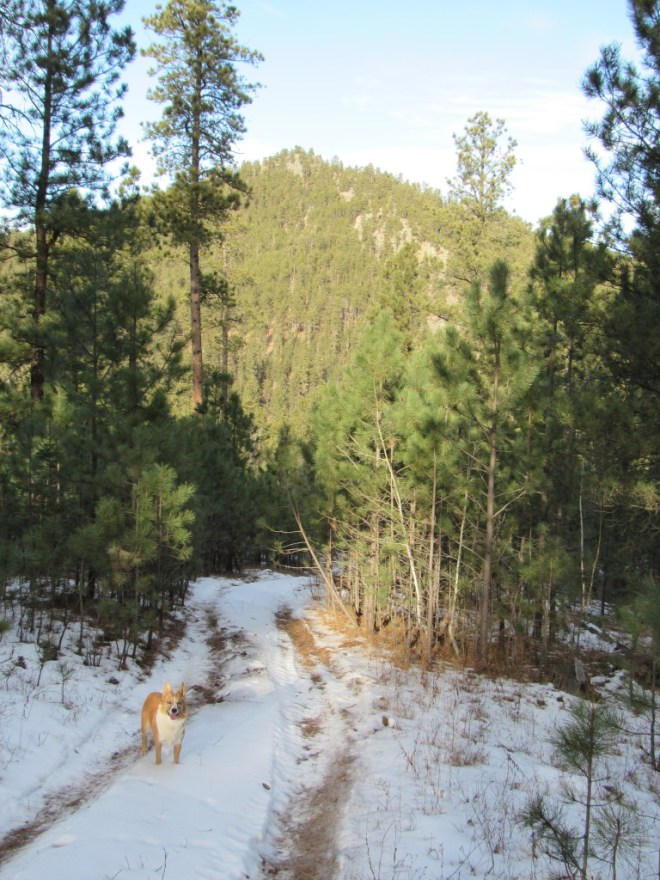 Lupe on her way down to the Middle Fork of Bogus Jim Creek. Buck Mountain is dead ahead to the N.