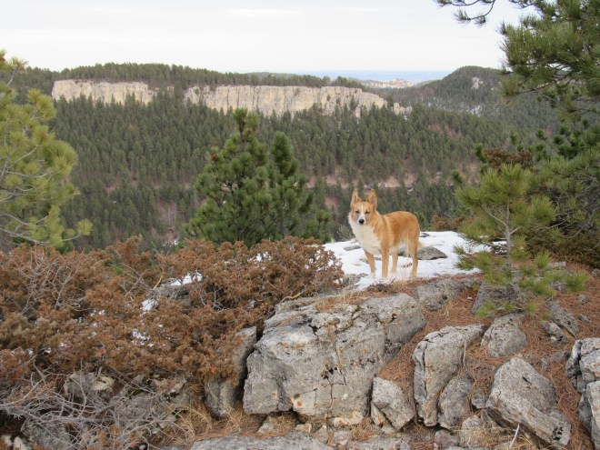 Lupe on the true summit of Green Top. White Mansion is the line of limestone cliffs seen to the NE.