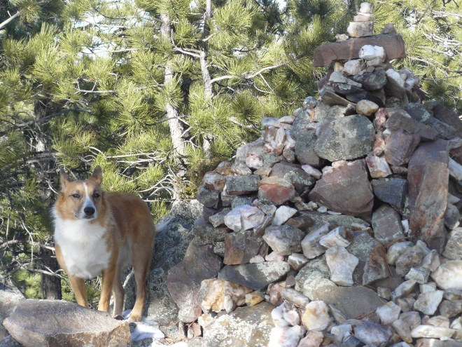 This was actually Lupe's 2nd successful summit of Thrall Mountain. The first time she was here was way back on Black Hills, SD Expedition No. 38 on 12-8-12, over two years earlier.