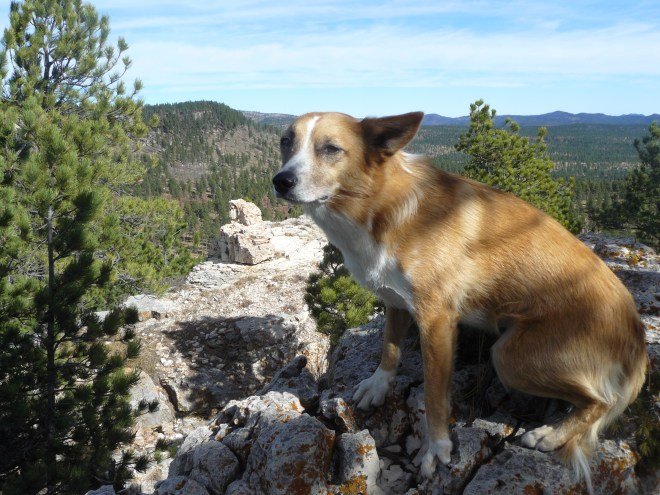 Lupe sits uncomfortably in the cold wind at the N end of Round Mountain. Her next peakbagging objective, Peak 6740, is the forested ridge seen to her L. Photo looks N.