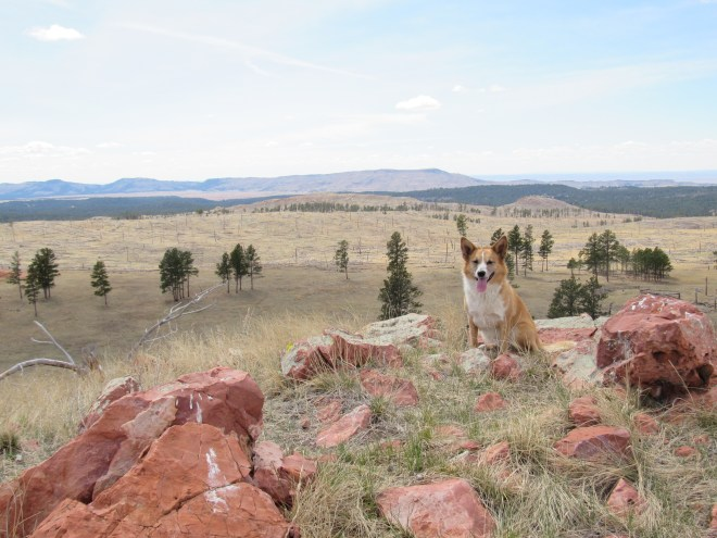 Two more of Lupe's peakbagging goals are seen here. Wildcat Peak (5,500 ft.) is on the L. Elk Benchmark (5,669 ft.) is the high point on the R closest to Lupe's ear. Photo looks SW.